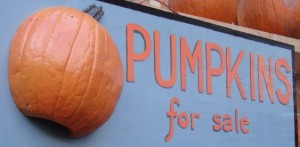 madsion square market pumpkins